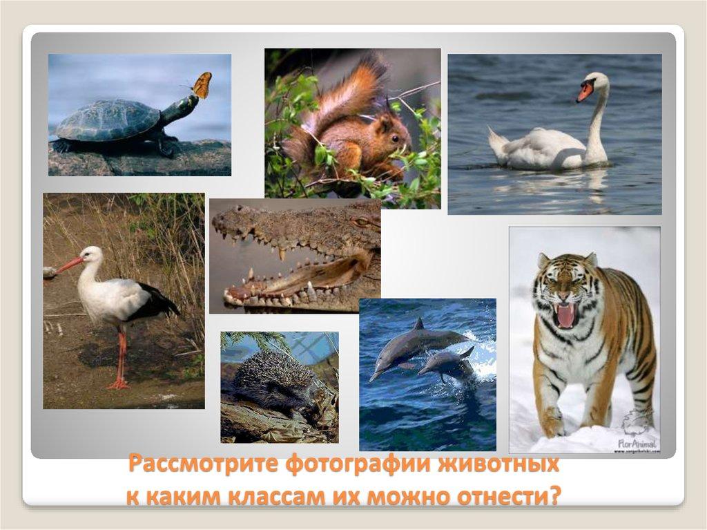2fa72144 Рассмотрите фотографии животных к каким классам их можно отнести?