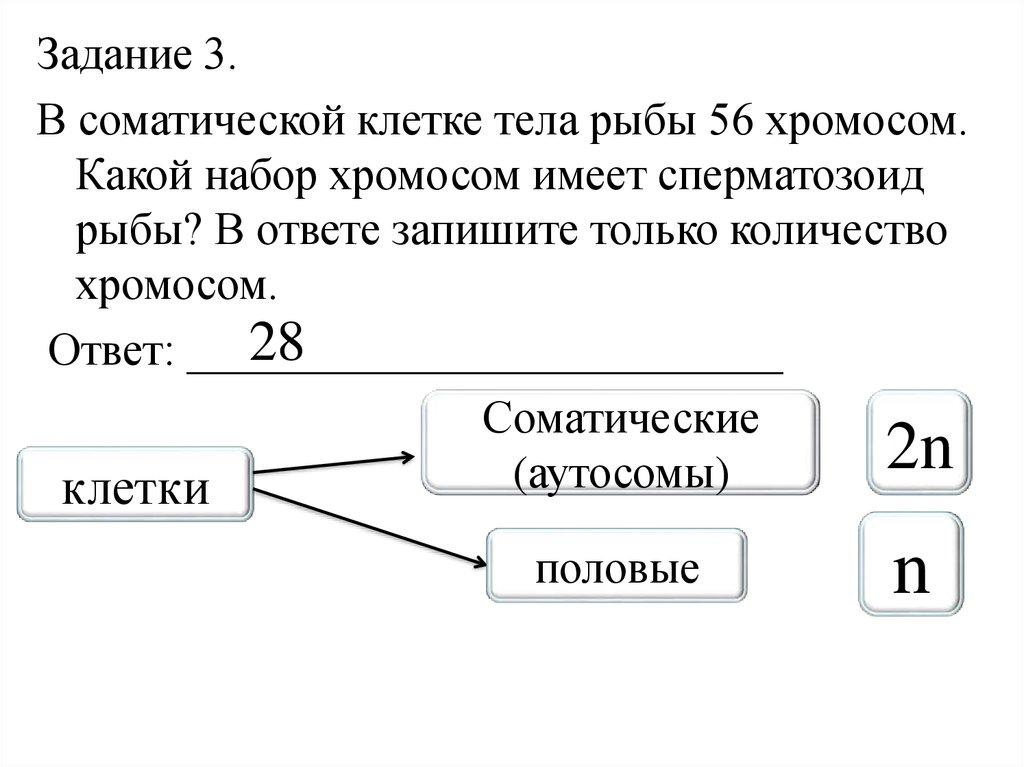Набор хромосом в сперматозоидах