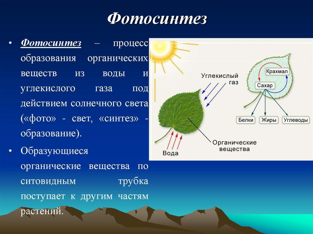 Когда происходит фотосинтез у растений