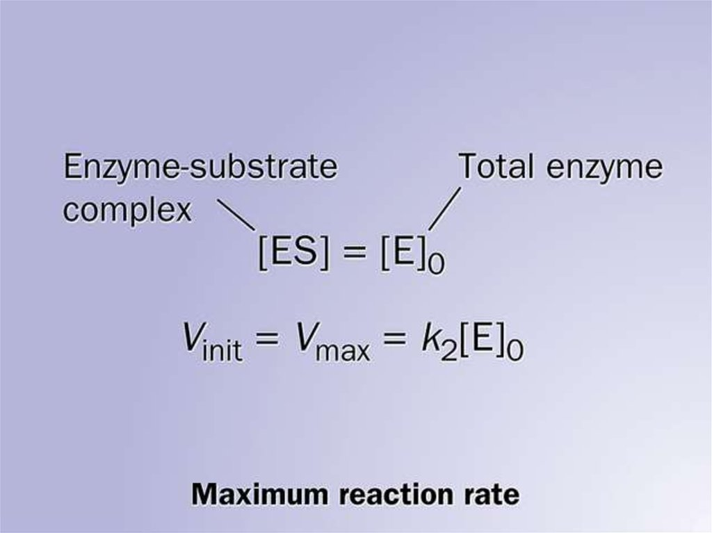 enzyme substrate complex - 1024×767