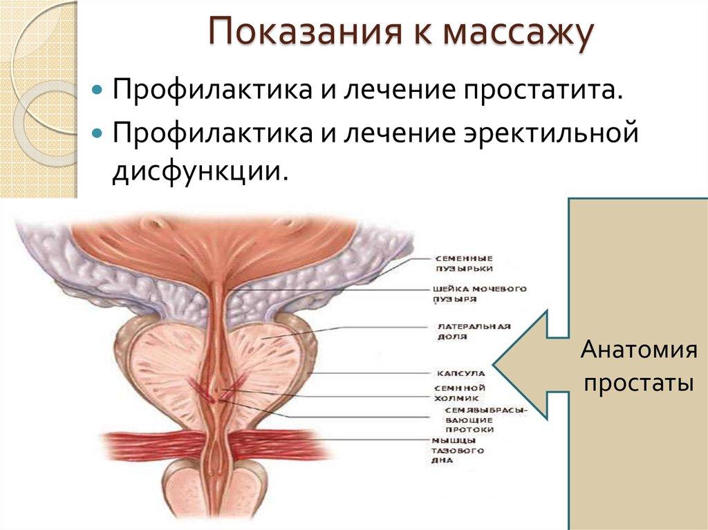Профилактика простатита и эректильной дисфункции простатит у мущин