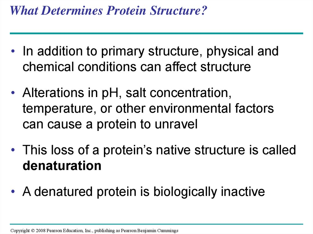 What Determines Protein Structure?