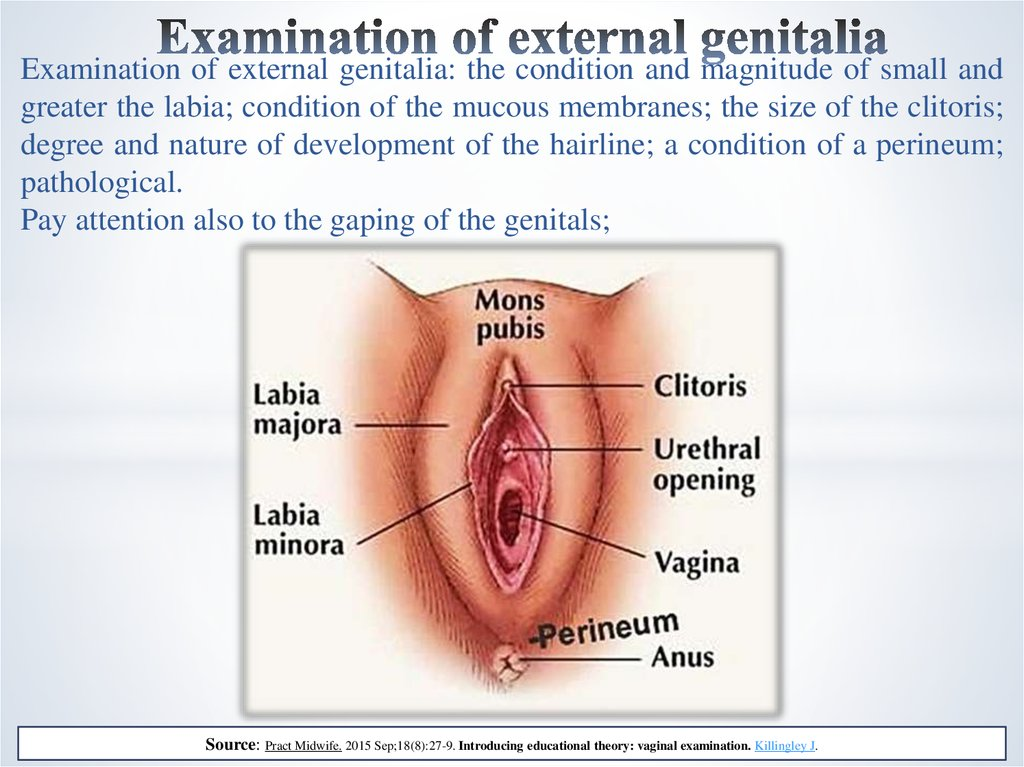 Examination of external genitalia