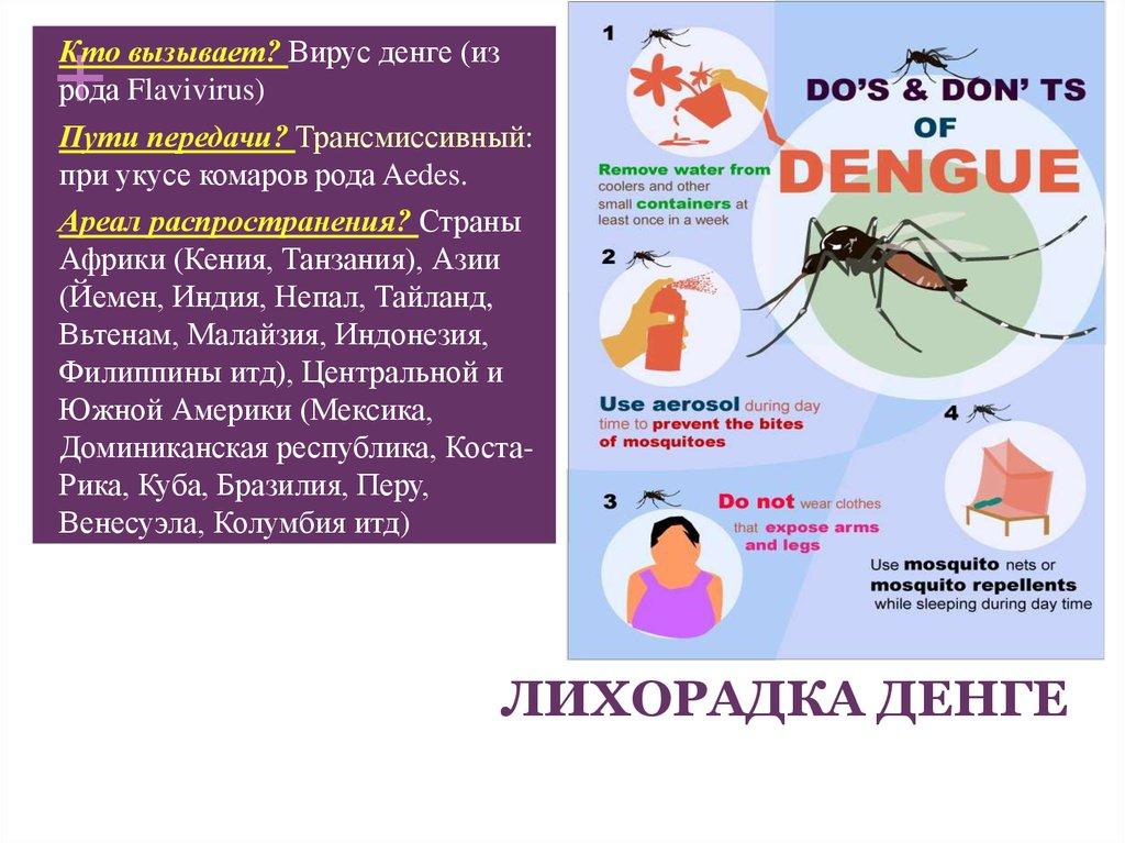 лихорадка денге в картинках власти показали