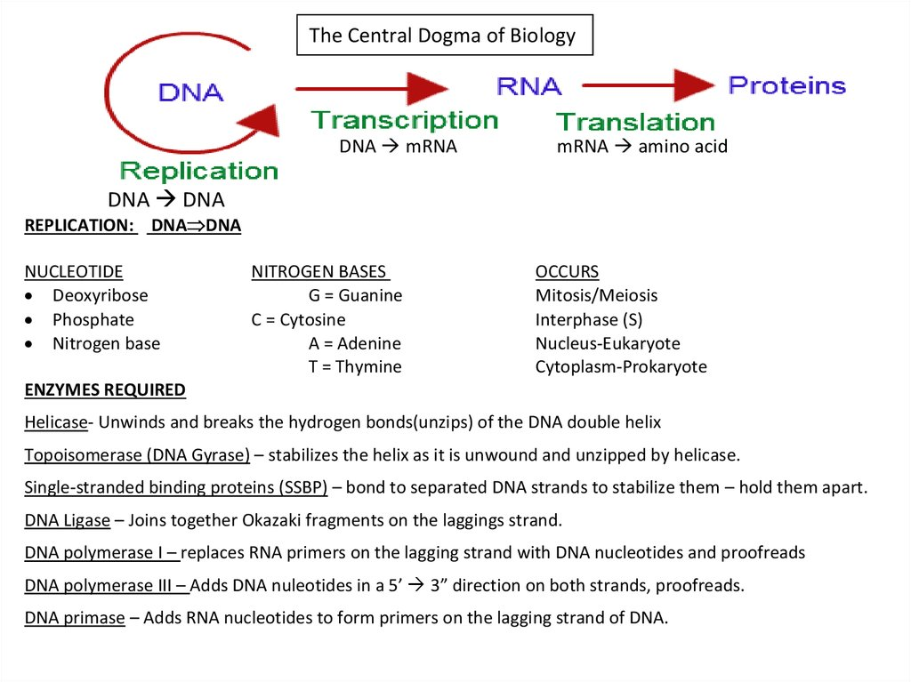 Dna Replication Rna Structure Function And Compare Dna Rna