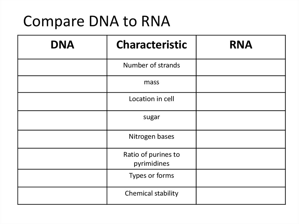 DNA Replication RNA Structure Function And Compare DNA