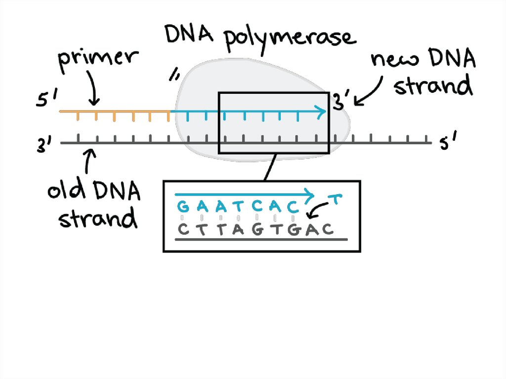dna replication  rna structure  u0026 function  and compare dna  u0026 rna