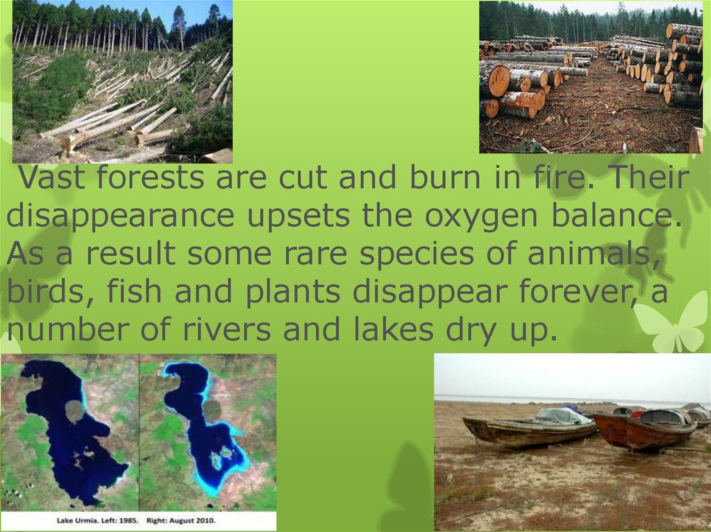 Vast forests are cut and burn in fire. Their disappearance upsets the oxygen balance. As a result some rare species of animals,