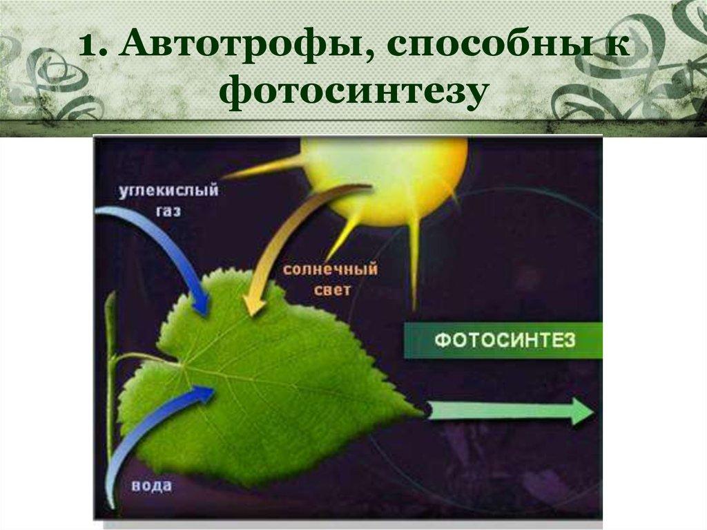 Способны ли побеги шиповника к фотосинтезу вами продолжим