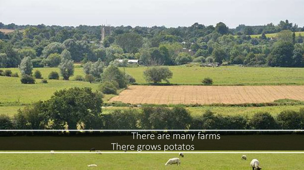 There are many farms  There grows potatos