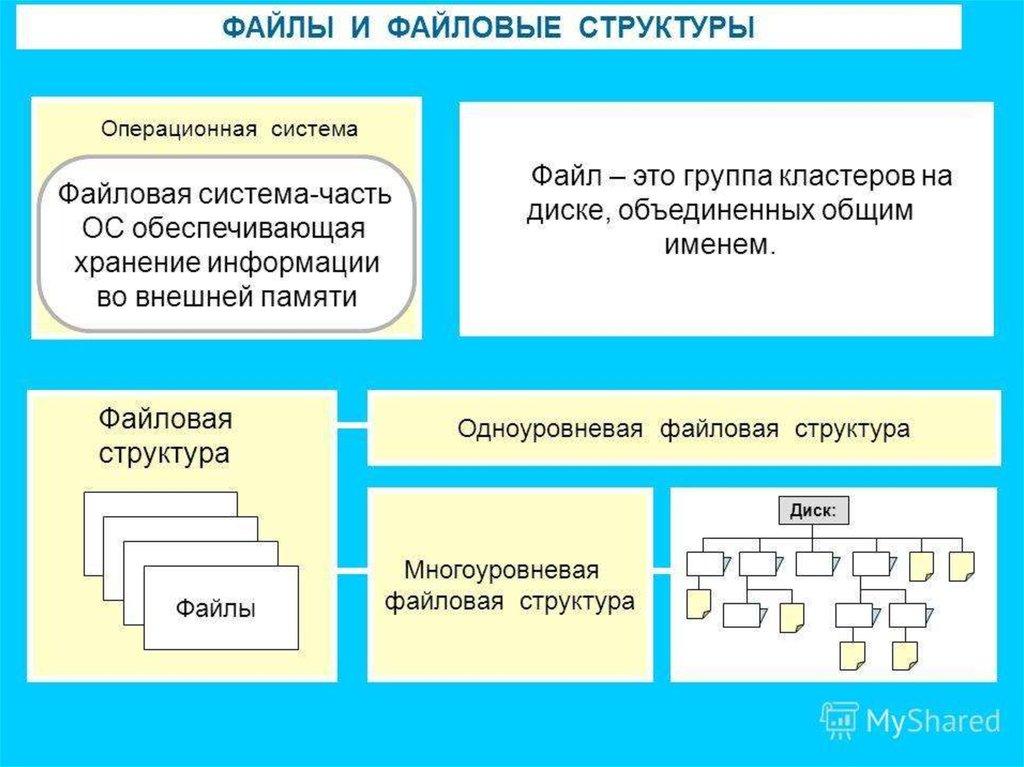 общая структура файловой системы анус Профессорская