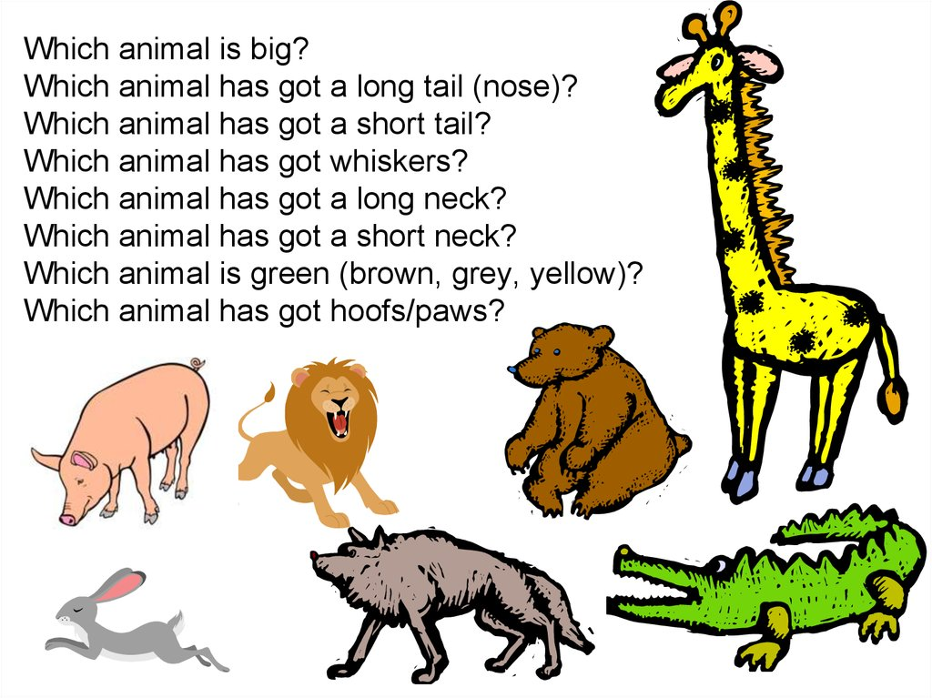 Which animal is big? Which animal has got a long tail (nose)? Which animal has got a short tail? Which animal has got whiskers?