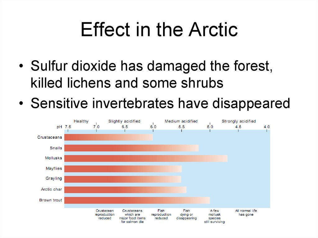 Effect in the Arctic