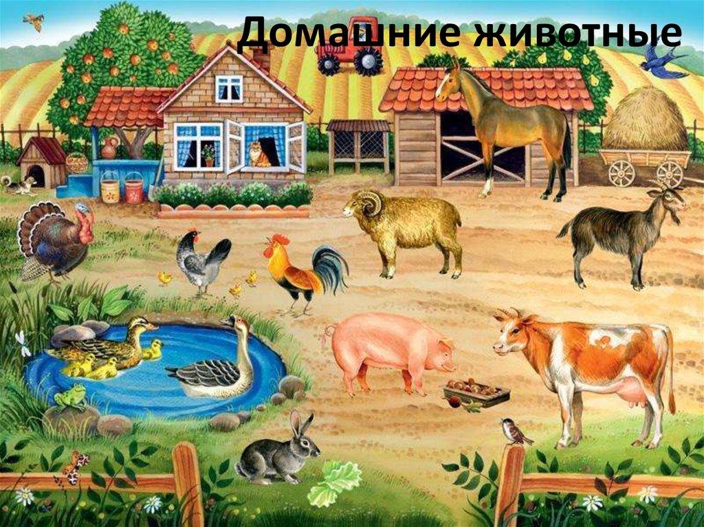 Сюжетные картинки домашние животные