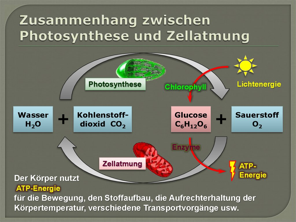 chloroplasten mitochondrien zytoskelett und zellwand online presentation. Black Bedroom Furniture Sets. Home Design Ideas