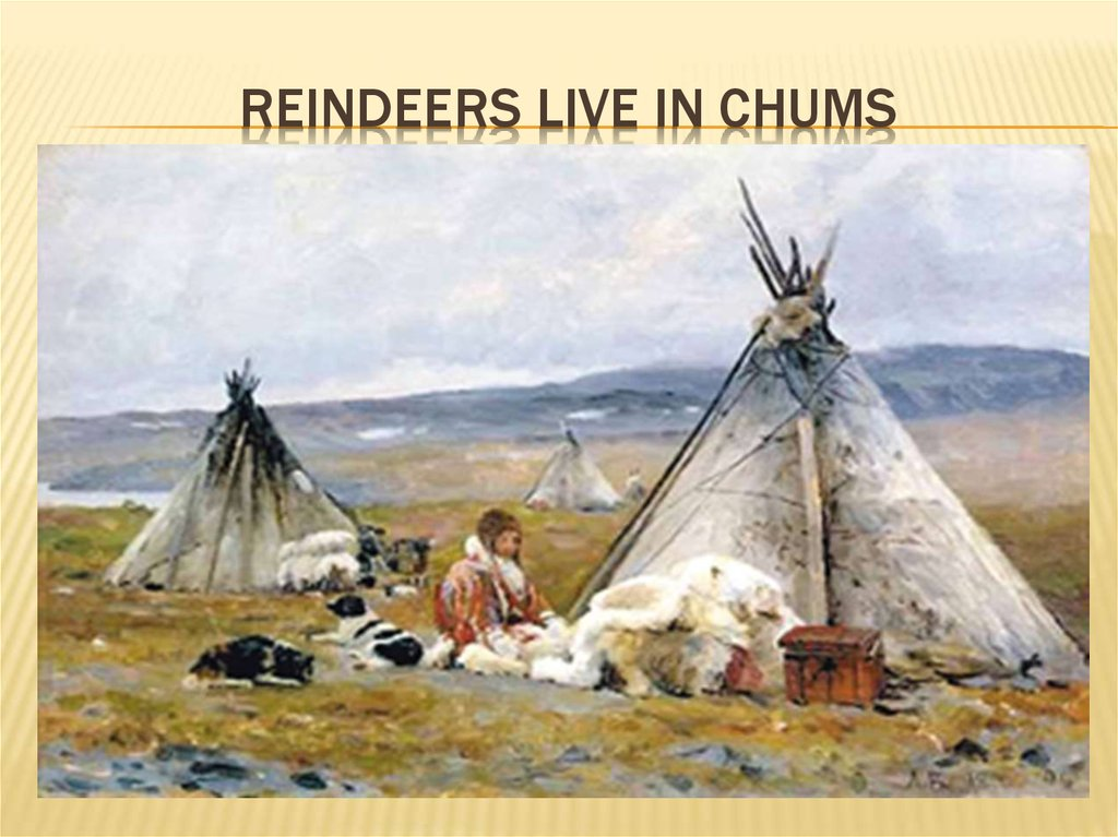Reindeers live in chums