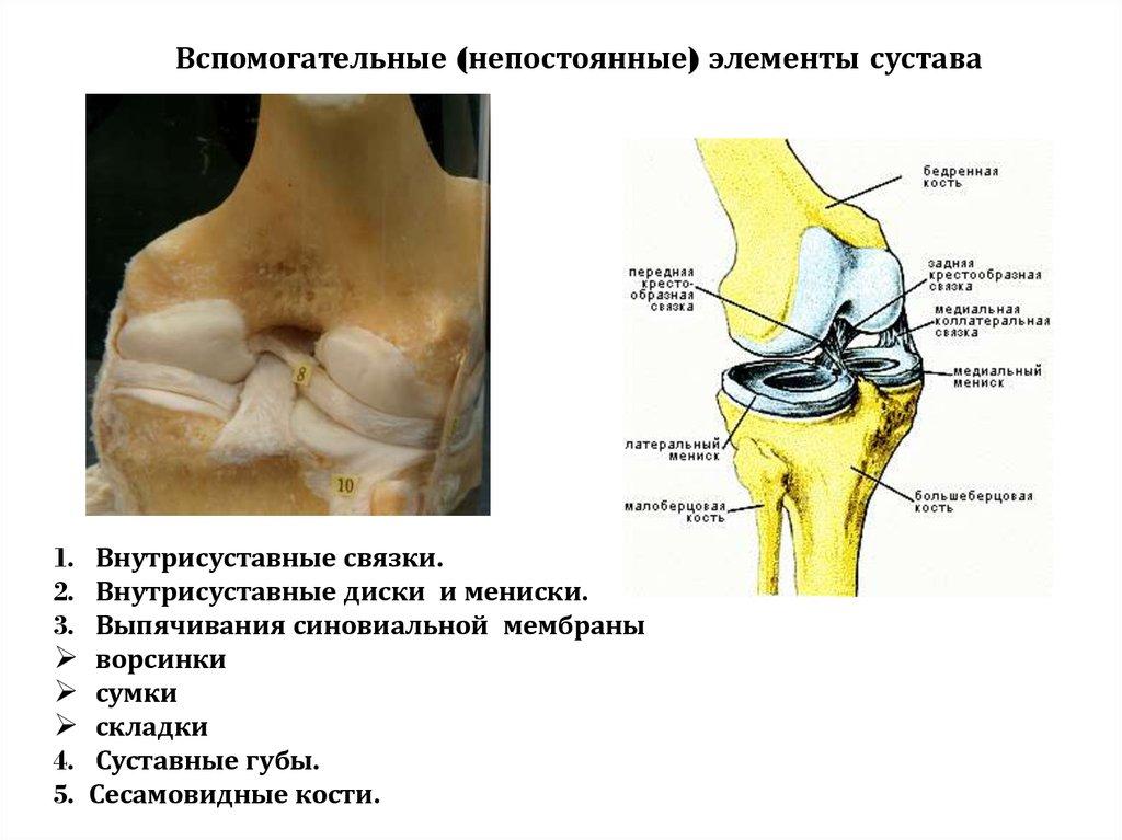 Суставные складки опух сустав голеностопный