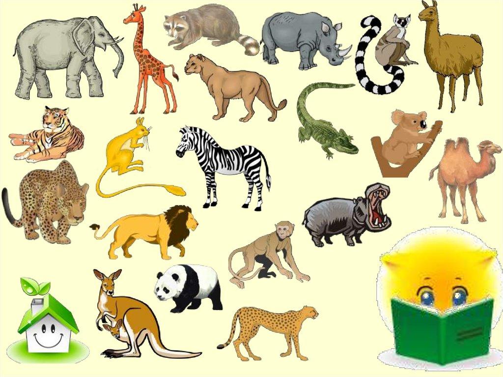 картинки животных жарких странах стекол пескоструйным
