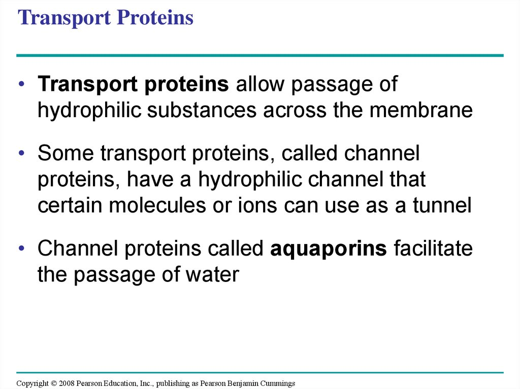 Transport Proteins