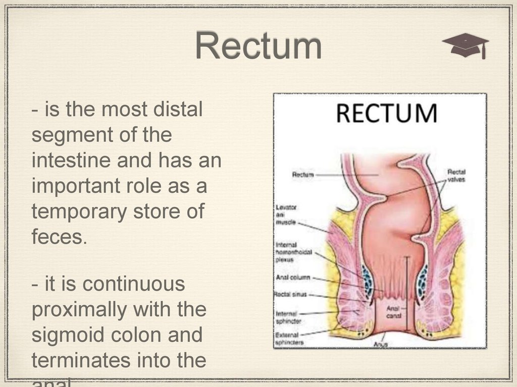 The Rectum Introduction Online Presentation