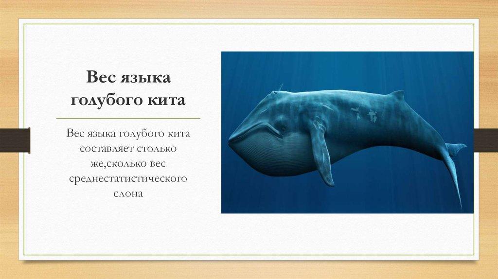 Сколько весит кит с картинками