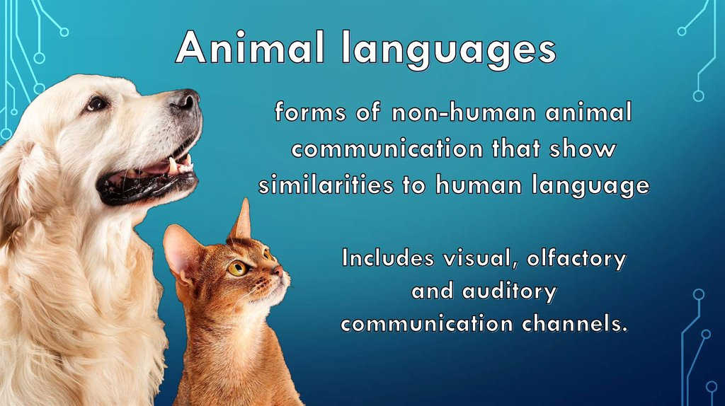 do any animals other than humans communicate using language It is because our cognition is in fact superior to any other animal that humans are the fastest runners (vehicles), fliers (jets), lifters (hydraulics), builders, and we can augment our senses.
