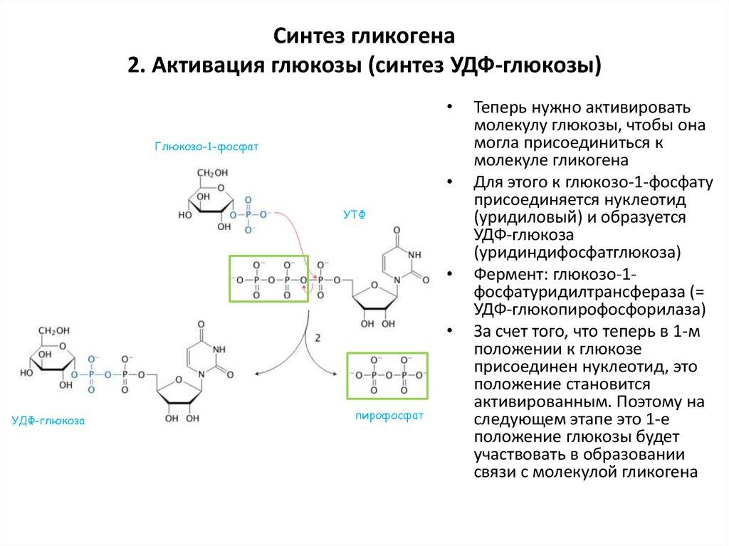 Метаболизм углеводов (дополнение) - online presentation