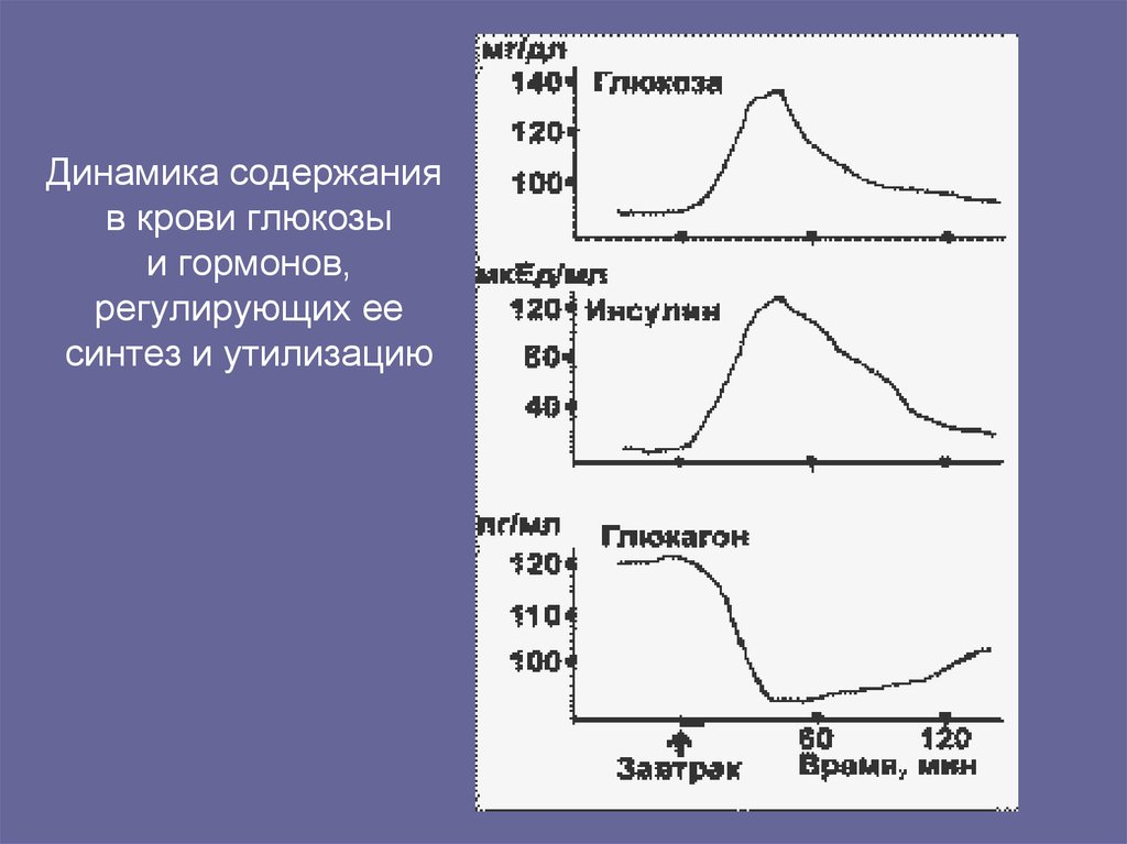 Гормон регулирующий содержание глюкозы в крови