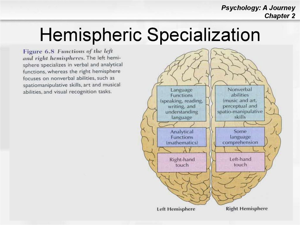 a study on the brains hemispheric specialisation Hemispheric specialization (hs) is a hemisphere-dependent relationship between a cognitive, sensory, or motor function and a set of brain structures it includes both the hosting by a given hemisphere of specialized networks that have unique functional properties and mechanisms that enable the inter-hemispheric coordination necessary for efficient processing.