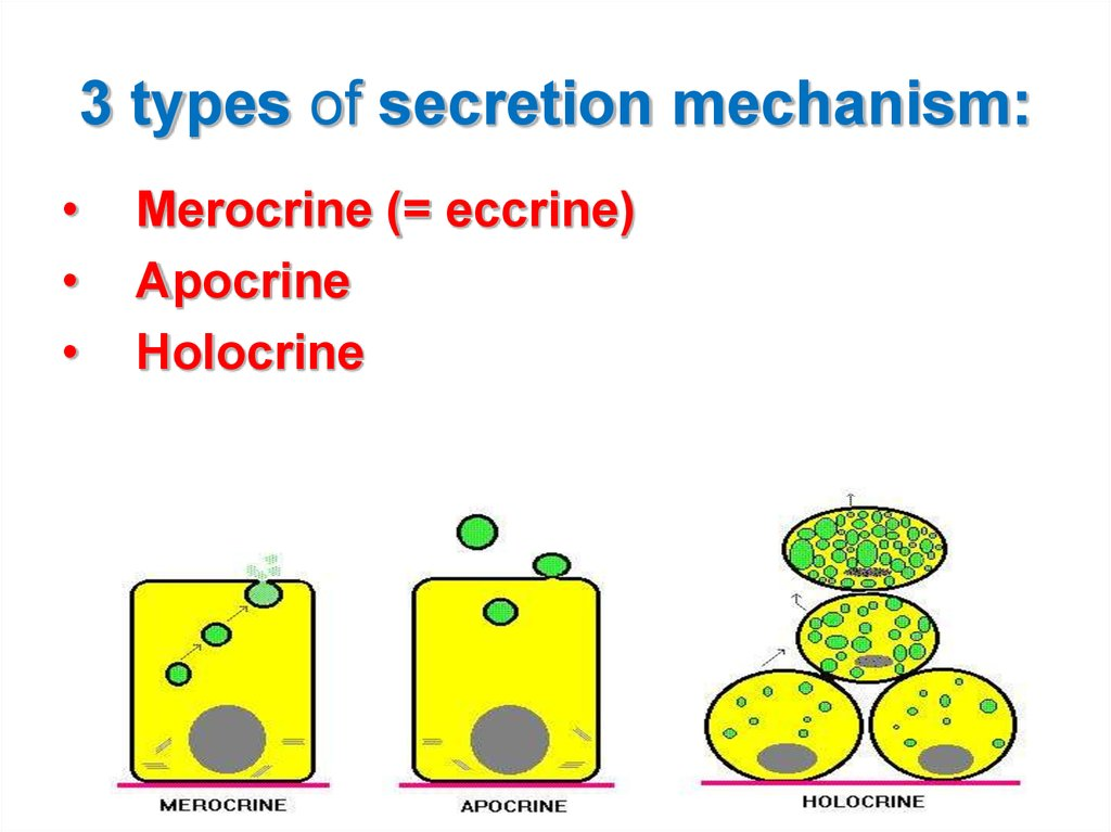 There are two types of gland in the body: exocrine and endocrine.