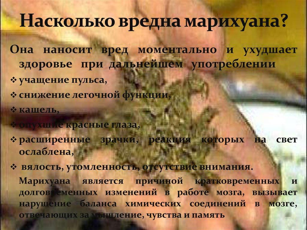 Не вреден ли запах марихуаны год запрета марихуаны