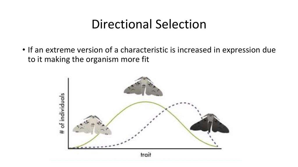 relationship between evolution and mutation