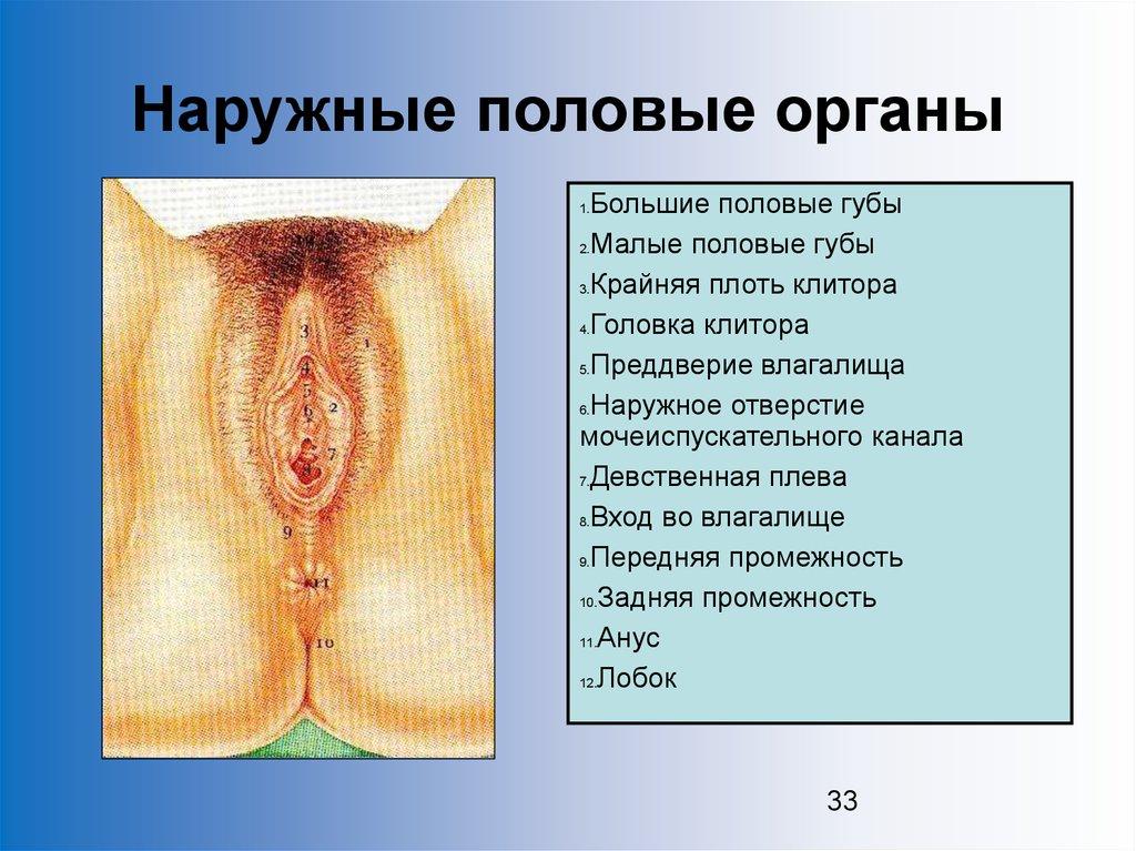 похождения секс