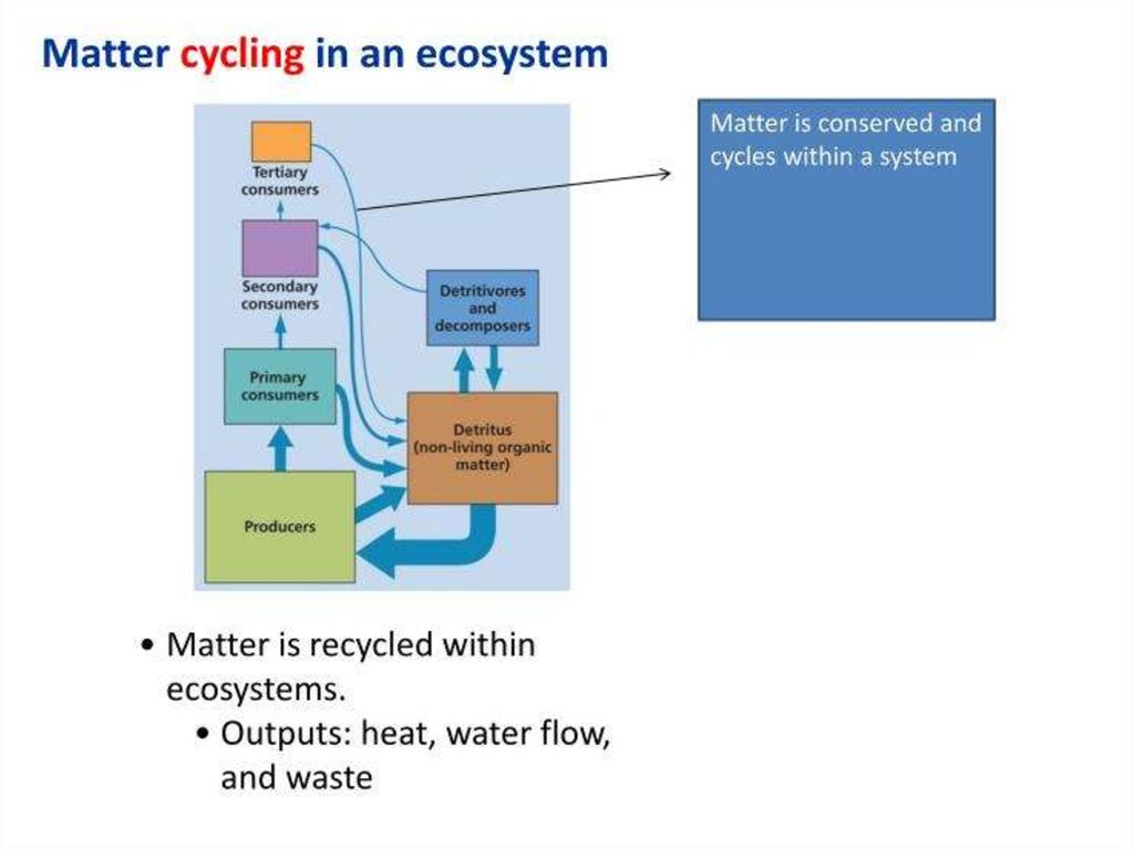 what would happen to an ecosystem if a all its decomposers and detritus feeders were eliminated b al Discuss new technology and emerging trends in supply chain management several emerging trends are (solved) january 04, 2018, buyers, and carriers for joint decision making, and it has created a new electronic distribution channel.