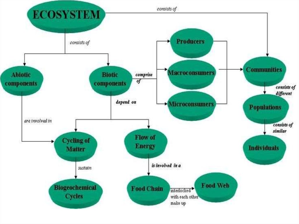 ecosystems Part of our mission is to steward healthy and resilient coastal and marine ecosystems that provide valued resources to our nation coastal and marine ecosystems involve complex interactions between organisms, their environment, and human activities.