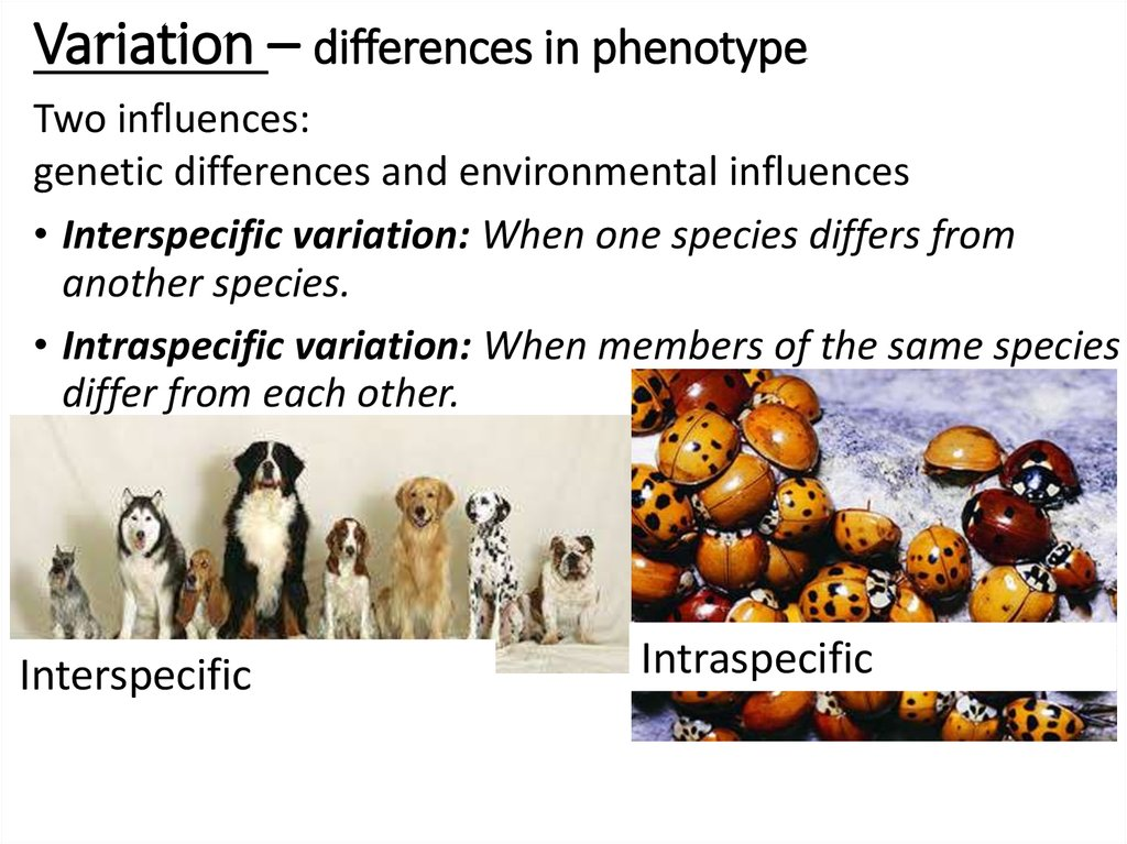 Variation – differences in phenotype