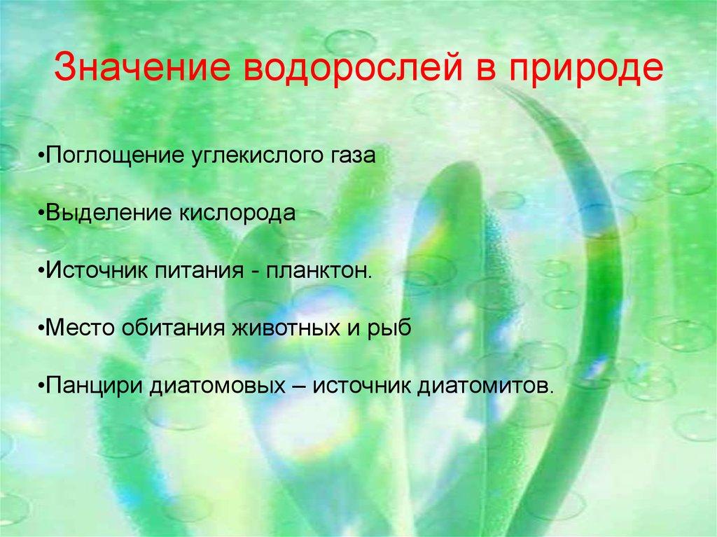 нанесение значения водорослей картинка ряд методов, способных