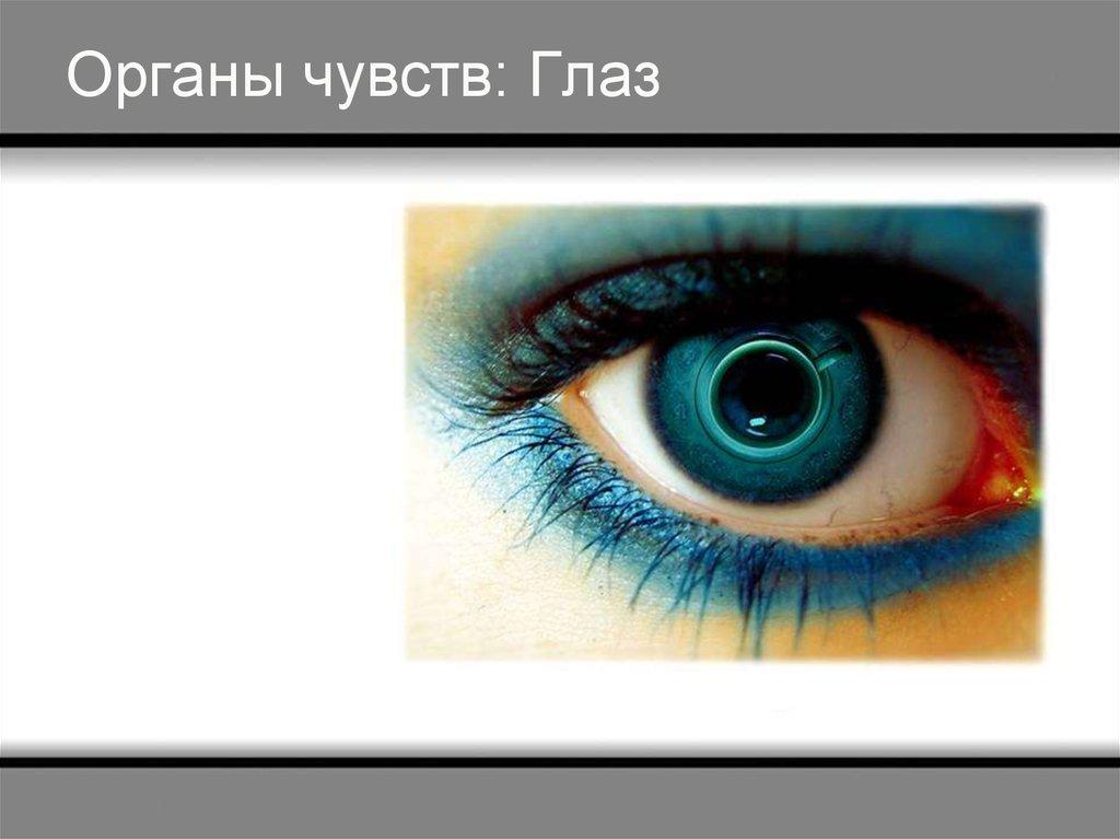 Глаз орган чувств картинки