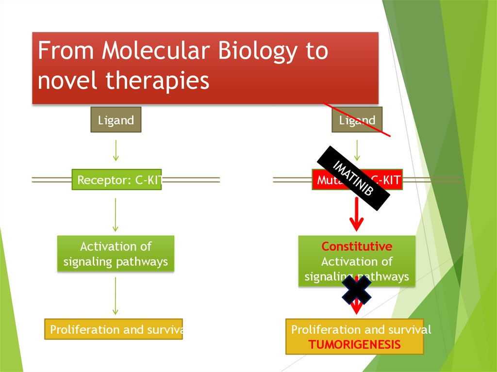 From Molecular Biology to novel therapies