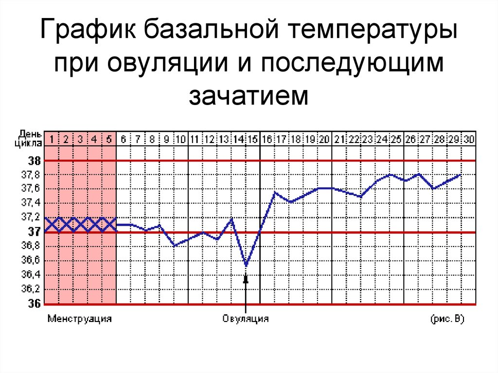 фото графиков базальной температуры модную