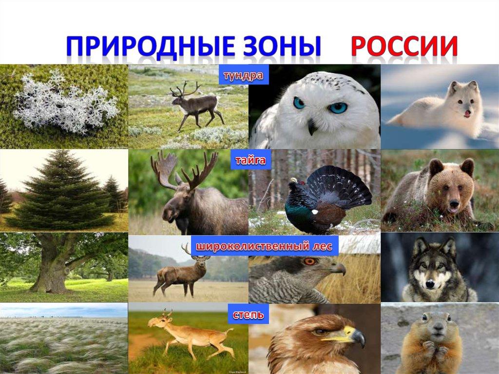 картинки животных и растений природных зон пришёл