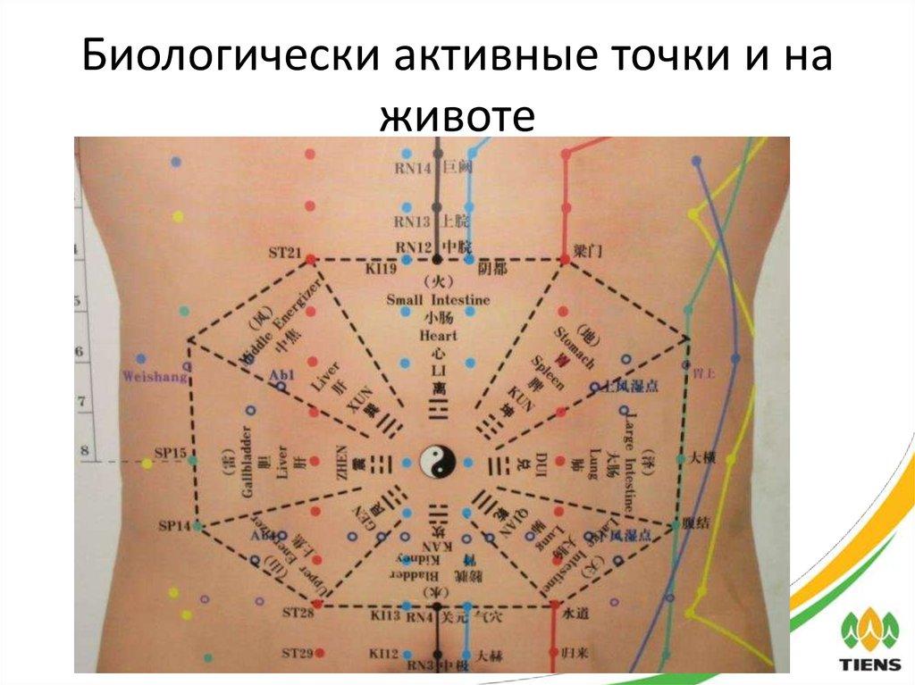 Биологически активные точки на теле человека фото с описанием