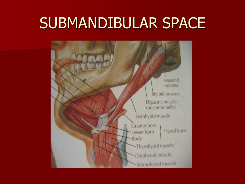 SUBMANDIBULAR SPACE