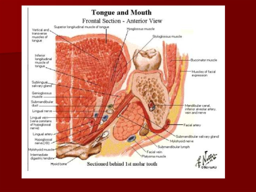 Surgical fascial spaces - online presentation