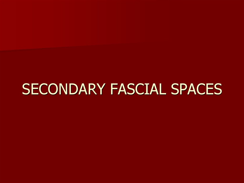 SECONDARY FASCIAL SPACES