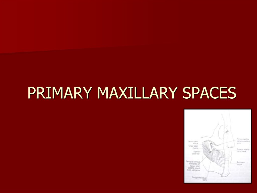 PRIMARY MAXILLARY SPACES