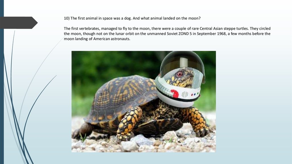 10) The first animal in space was a dog. And what animal landed on the moon? The first vertebrates, managed to fly to the moon,