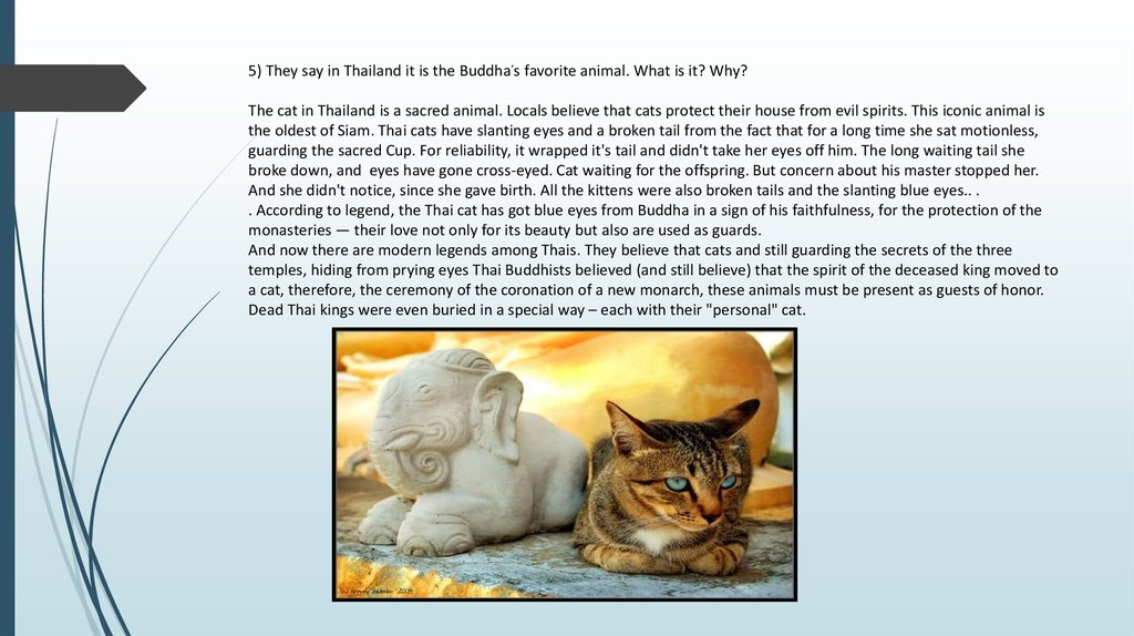 5) They say in Thailand it is the Buddha,s favorite animal. What is it? Why? The cat in Thailand is a sacred animal. Locals