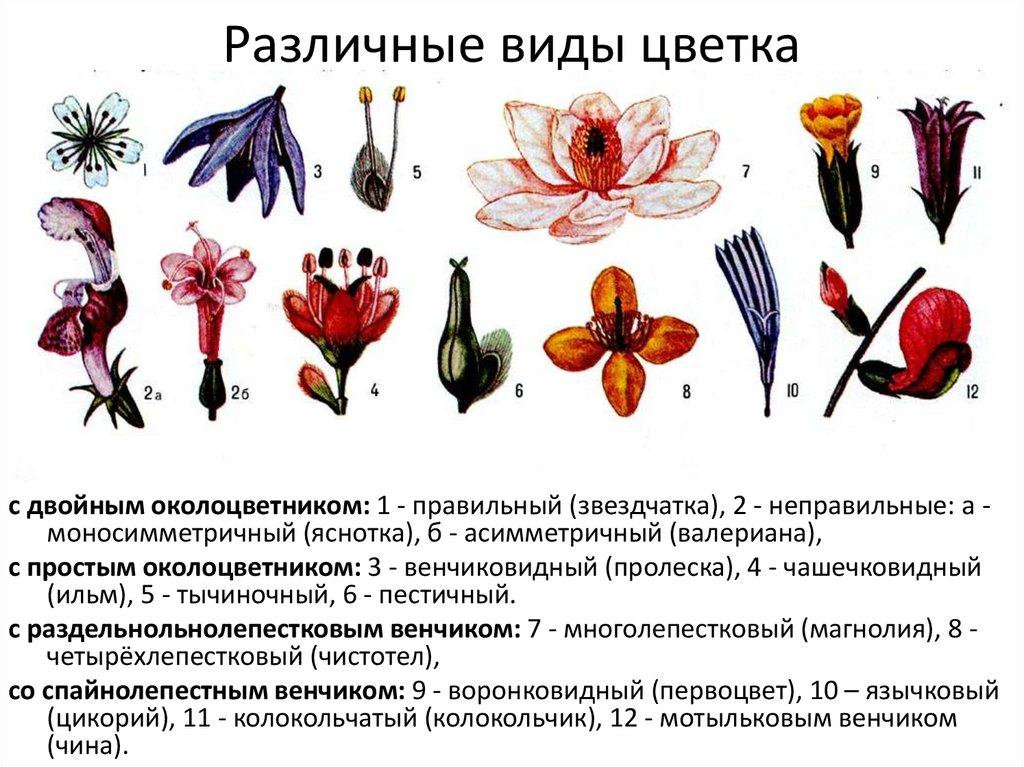 классификация цветов с картинками