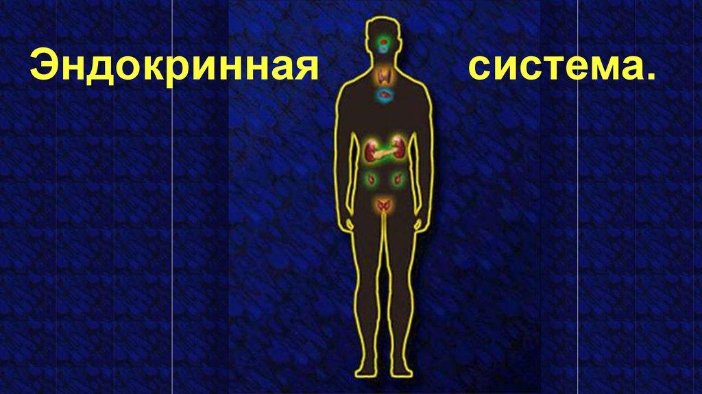Картинки эндокринной системы